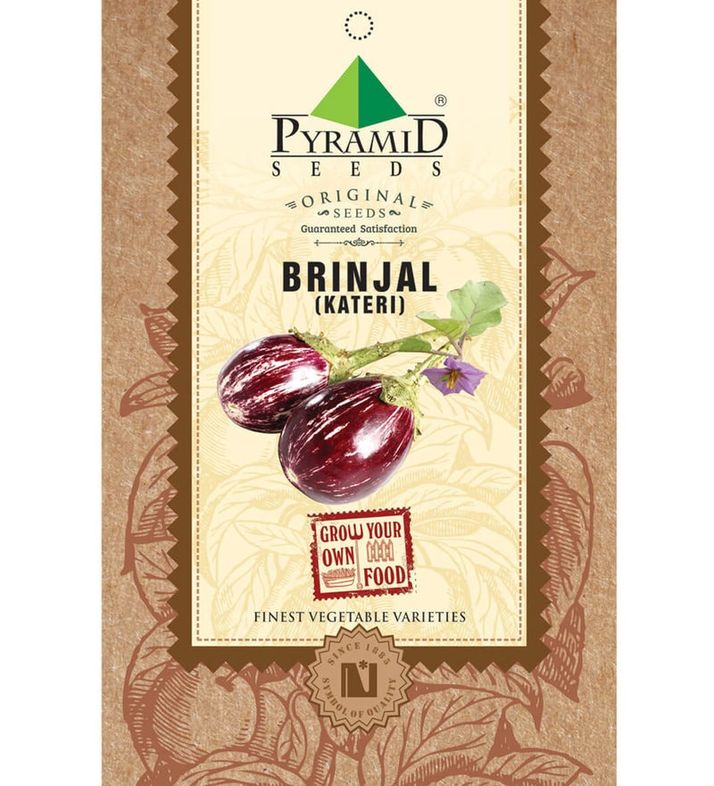 Brinjal Kateri Seeds by Pyramid Seeds