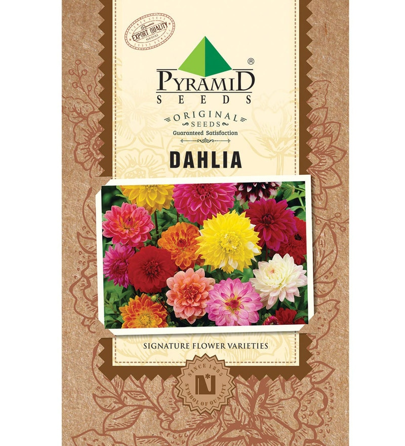 Dahlia Seeds by Pyramid Seeds