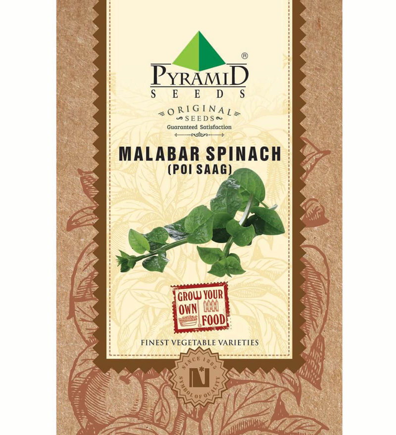 Pyramid Malabar Spinach (Poi Saag) Seeds
