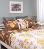 Multicolour Cotton Queen Silverleaf Bed Sheet with 2 Pillow Covers by Raymond Home