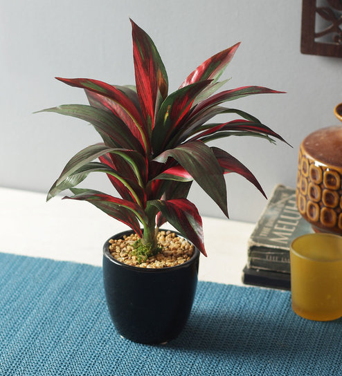 Red Artificial Tall Natural Looking Dracaena Bonsai Plant in Ceramic on red bonsai plant, red fittonia plant, red draceane, red dieffenbachia plant, red zinnia plant, cordyline plant, red pothos plant, red calibrachoa plant, red spathiphyllum plant, red ferns plant, red peperomia plant, red caladium plant, red echeveria plant, red dracaena marginata, red edged dracaena, red aphelandra plant, red clivia plant, red sedum plant, red begonia plant, red sansevieria plant,