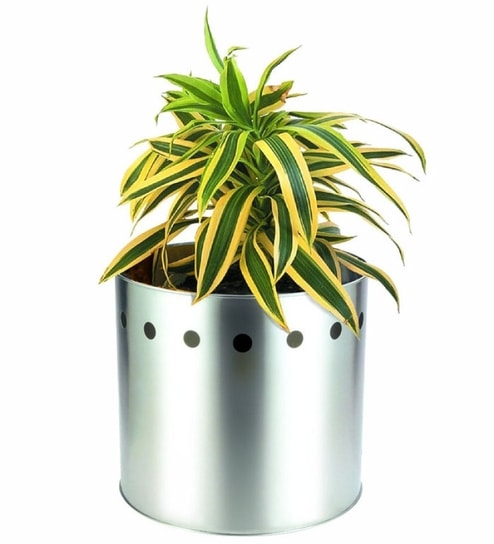 Silver Queen Stainless Steel Planter By Silver Queen Online Pots
