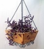 Tuscany Hanging Basket Planter by Studio Earthbox