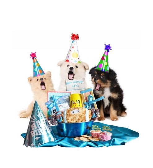 Buy Tails Love Gifts Too Blue Dog Birthday Bowl H&er Online - Clothes - Clothing u0026 Accessories - Pepperfry  sc 1 st  Pepperfry & Buy Tails Love Gifts Too Blue Dog Birthday Bowl Hamper Online ...
