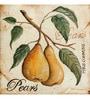 Wall Decor Multicolor Canvas 24 x 24 Inch Pears Framed Digital Art Print
