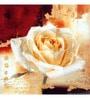 Wall Decor White Canvas 24 x 24 Inch Rose Framed Digital Art Print