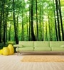 Wallskin Green Non Woven Paper Walk in Woods Wallpaper