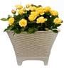 Tok 8 Inches Round Basket Planter by Yuccabe Italia